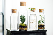 Composition of plants in bottles on a stool. Layered soil, moss, dirt and clay stones.