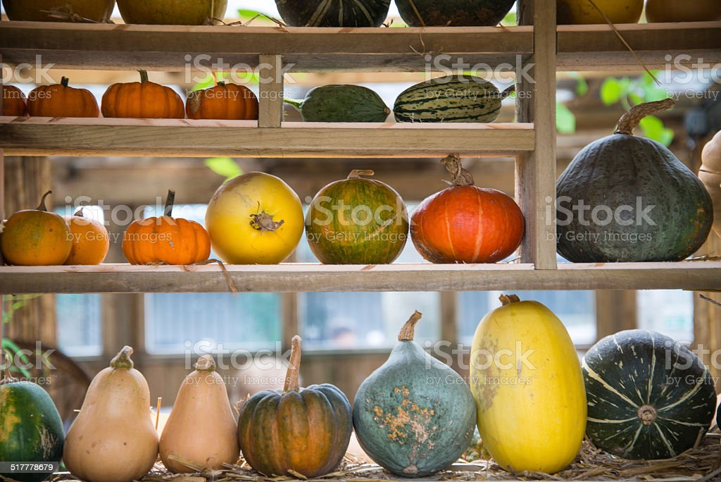 Composition of pumpkin squash and melon on natural background stock photo