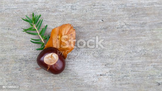 istock Composition of the nuts, twigs and leaf lying on a wooden background. 801585002