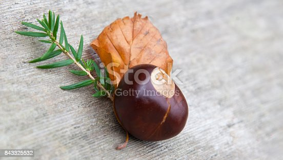 istock Composition of the nuts, twigs and leaf lying on a wooden background. 843325532