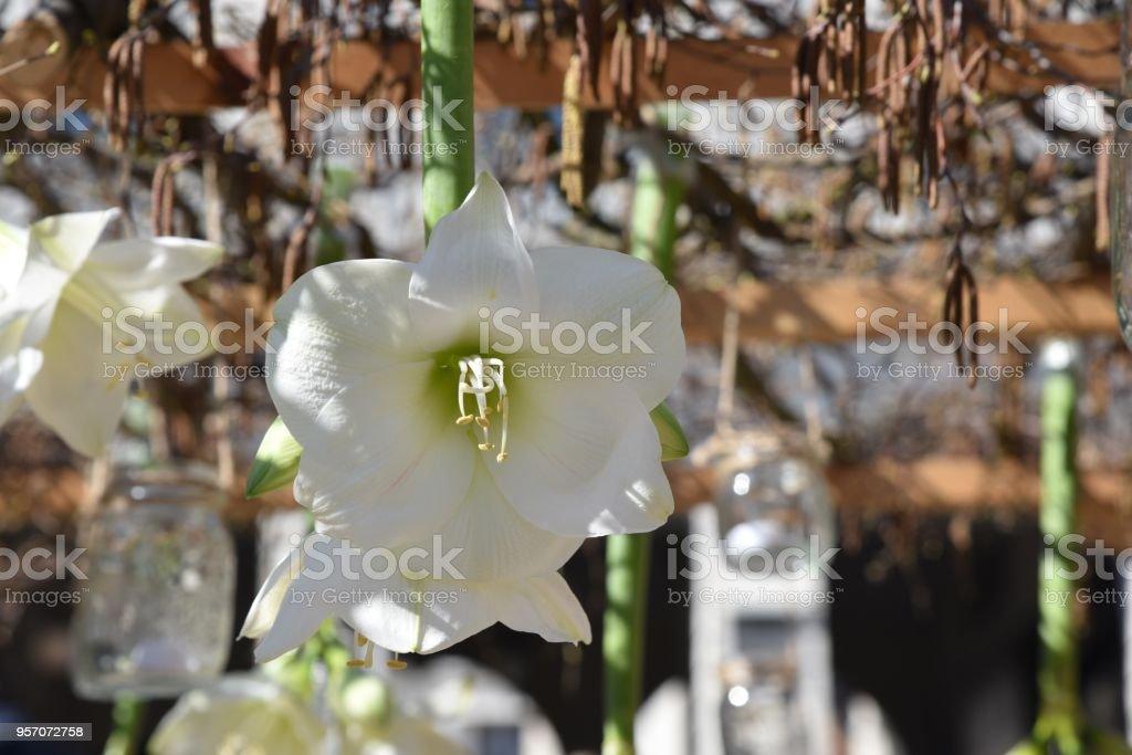 Fiori Bianchi X Matrimonio.Composizione Di Fiori Bianchi Per Decorazione Matrimonio Stock