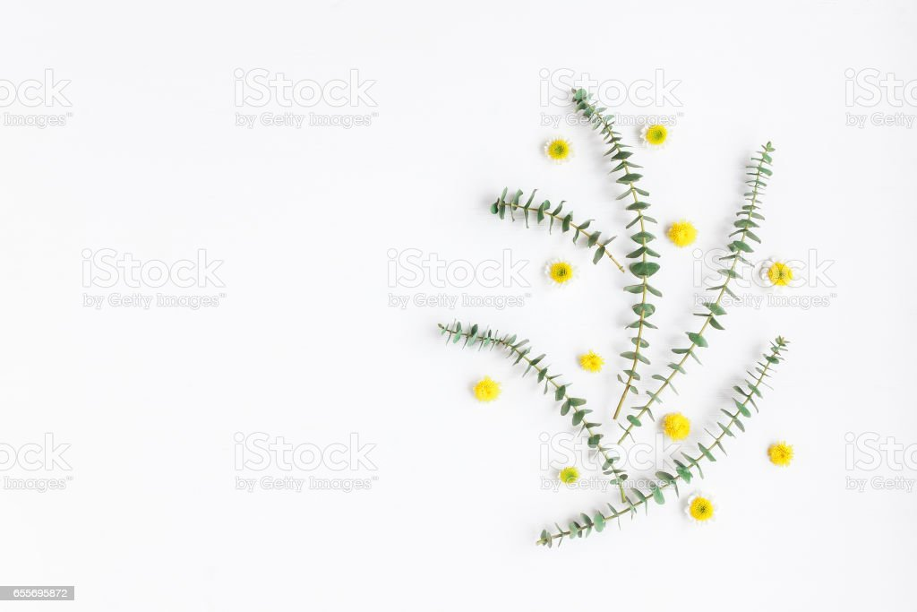 Composition with fresh eucalyptus branches and yellow flowers stock photo