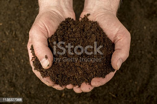 Compost - natural fertilizer in the hand