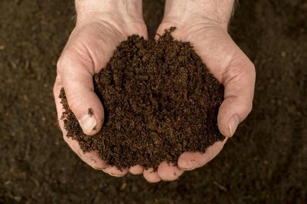 Kompost – Foto