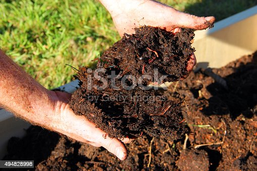 Horse manure compost and worms in hands