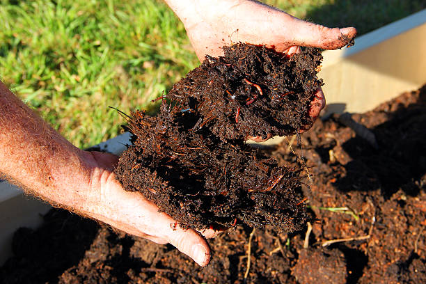 Compost Horse manure compost and worms in hands worm stock pictures, royalty-free photos & images