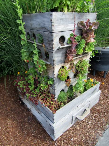 Compost worm bin and grow box garden planter Compost worm bin and grow box garden planter made out of old drawers sedum plant stock pictures, royalty-free photos & images