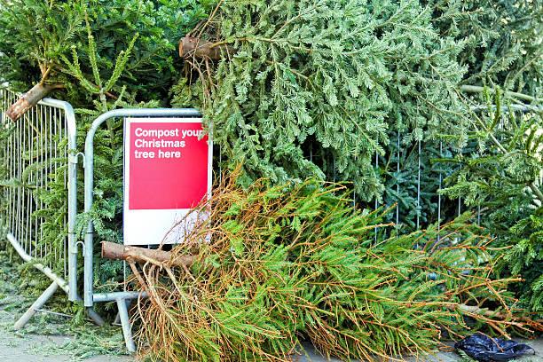 Composting Christmas tree stock photo