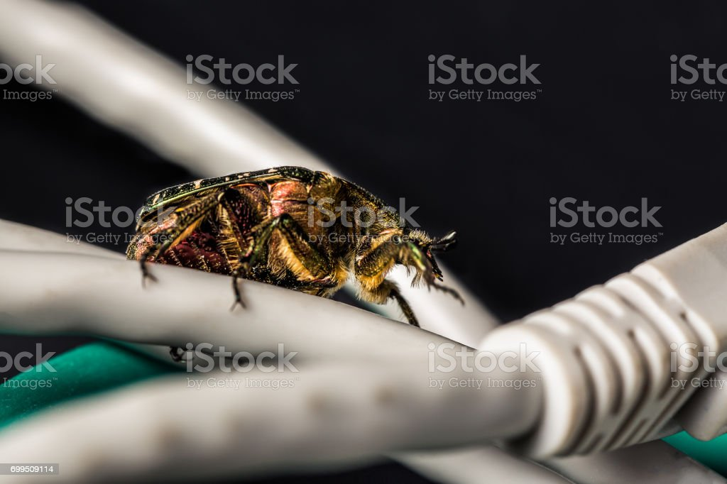 Computer and networks bug concept. Bug on computer ethernet cables close up on black background. Selective focus stock photo