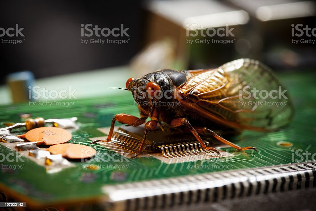 Computer Bug - Virus Concept royalty-free stock photo