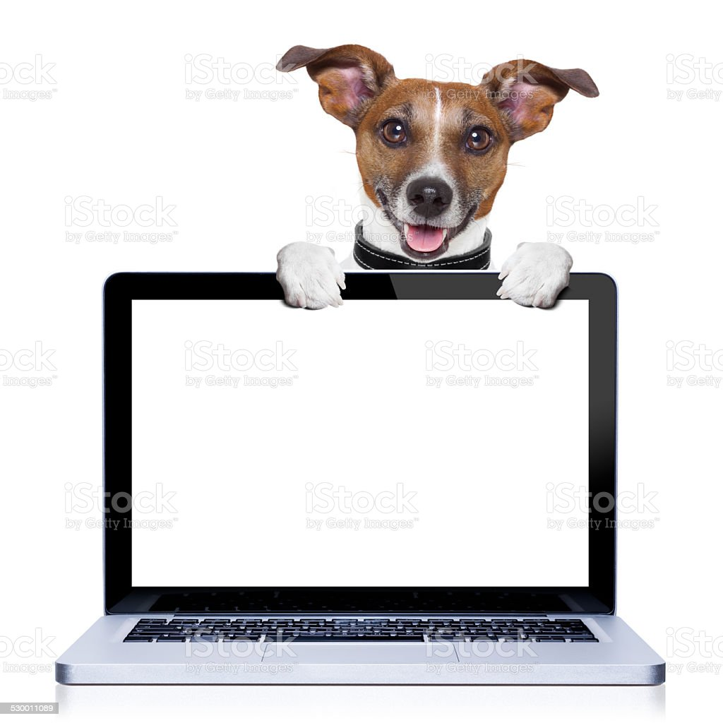 computer dog stock photo