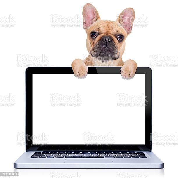 Computer dog picture id530011093?b=1&k=6&m=530011093&s=612x612&h=h0y9kpjg6ti aatyxfcvr0ltbqddsfhzf1ccjhw5xsk=