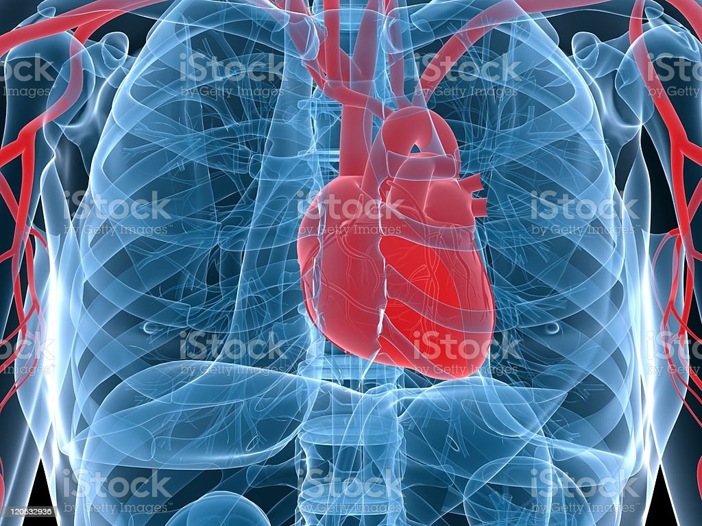 Computer generated x-ray of human heart in chest royalty-free stock photo