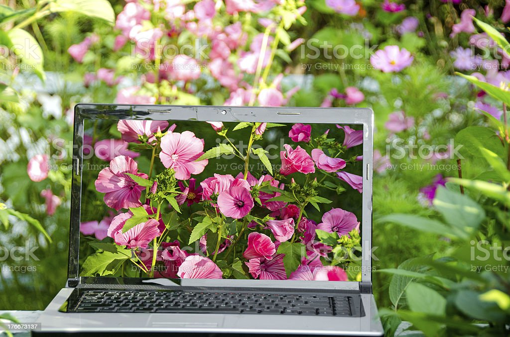 Computer in Flower Garden royalty-free stock photo