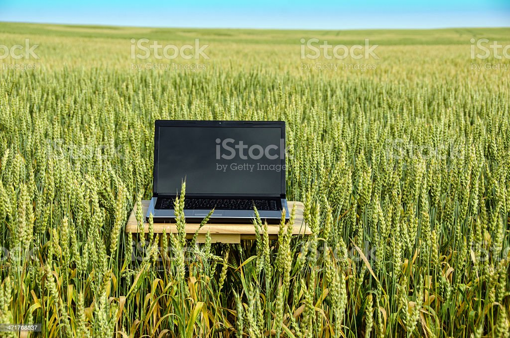 Computer in Wheat Field royalty-free stock photo