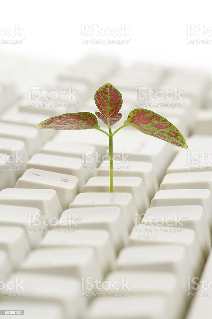 Tastiera del Computer e Germoglio foto stock royalty-free