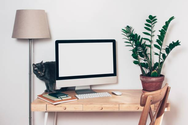 Computer with mockup screen on office table and grey kitten picture id1152900750?b=1&k=6&m=1152900750&s=612x612&w=0&h=6lstlgzxxrrscx5bzmqgqacxp9w7onabaevdswzk tq=