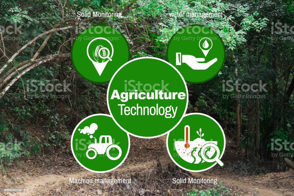 Concept agriculture background jungle in Burma stock photo