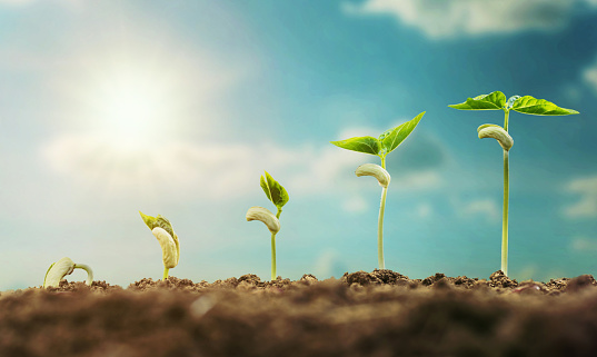 1094263056 istock photo concept agriculture planting seeding growing step with blue sky and sunlight 1014150116