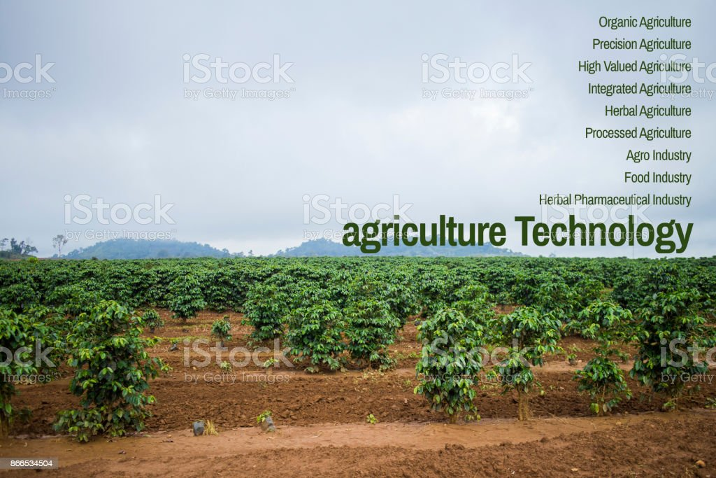 concept Agritech system coffee stock photo