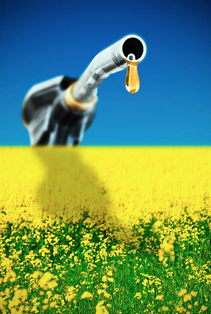 Concept Bio fuel A gas pump nozzle over canola field. Focus on foreground. biodiesel stock pictures, royalty-free photos & images