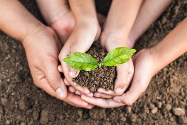 concept eco hand helping holding protection young plant stock photo