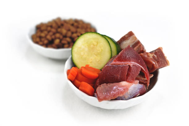 concept for different dog feeding methods with bowl with bowl with chunk of raw meat and vegetables in front and blurry dry food kibbles in back isolated on white background - desperdício alimentar imagens e fotografias de stock