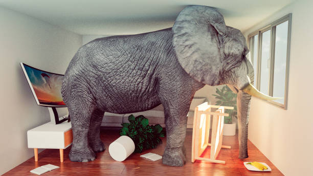 concept image of elephant stuck in a small living room and looking to get out - trap house stock pictures, royalty-free photos & images