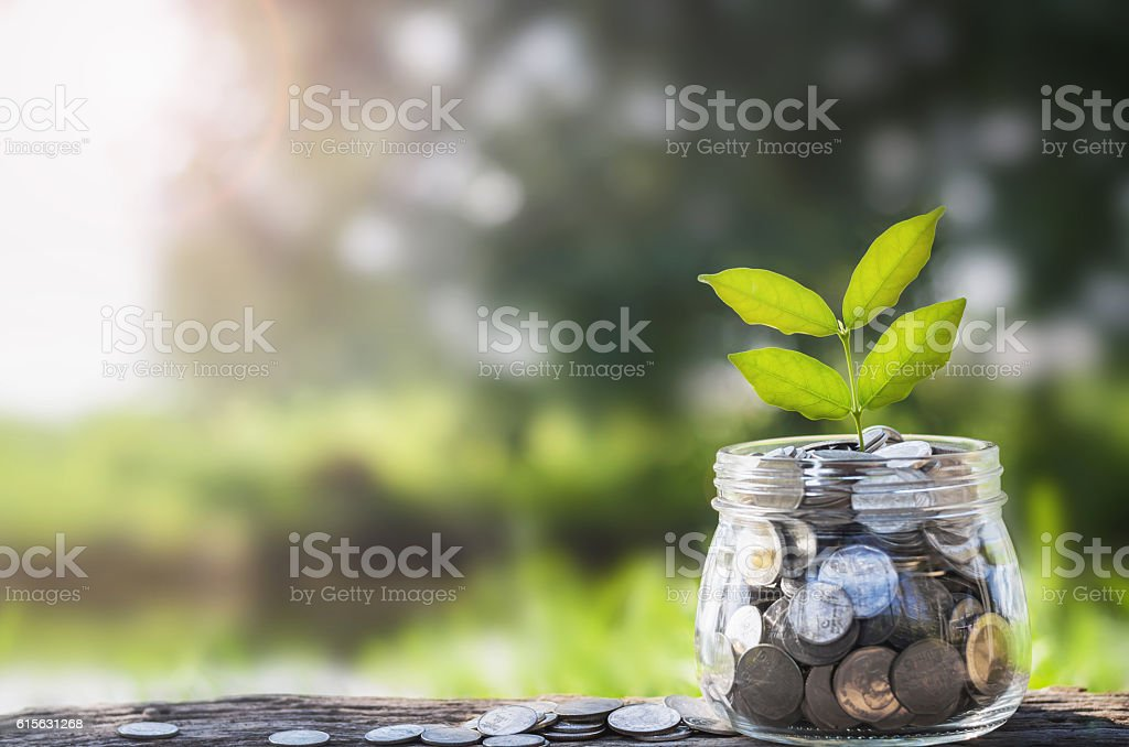 concept money growing and small tree in jar stock photo