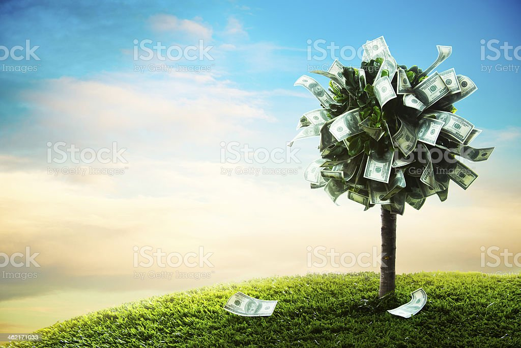 concept, money tree on grass stock photo