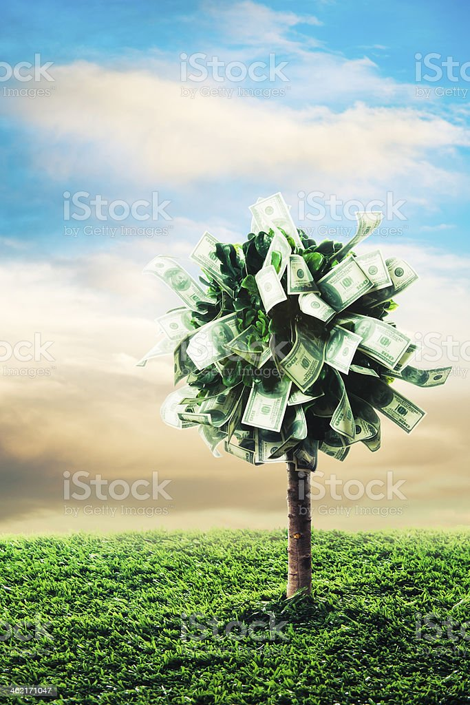 concept, money tree on grass stock photo
