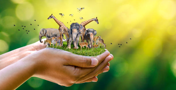 """Concept Nature reserve conserve Wildlife reserve tiger Deer Global warming Food Loaf Ecology Human hands protecting the wild and wild animals tigers deer, trees in the hands green background Sun light Concept Nature reserve conserve Wildlife reserve tiger Deer Global warming Food Loaf Ecology Human hands protecting the wild and wild animals tigers deer, trees in the hands green background Sun light wildlife or """"wild animal"""" stock pictures, royalty-free photos & images"""