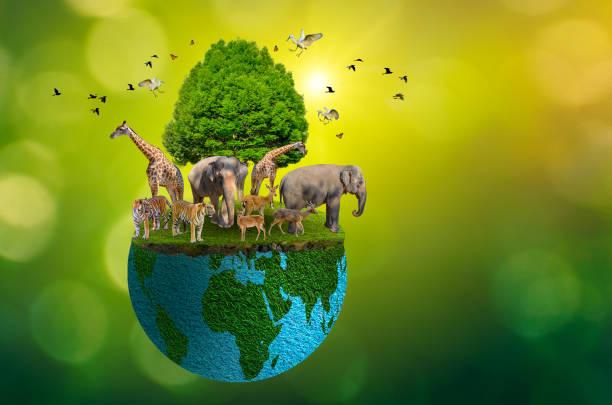 Concept nature reserve conserve wildlife reserve tiger deer global picture id1197795305?b=1&k=6&m=1197795305&s=612x612&w=0&h=im 83 qii9mincpuhdbpbtpywem foa9v8fs gsl4l4=