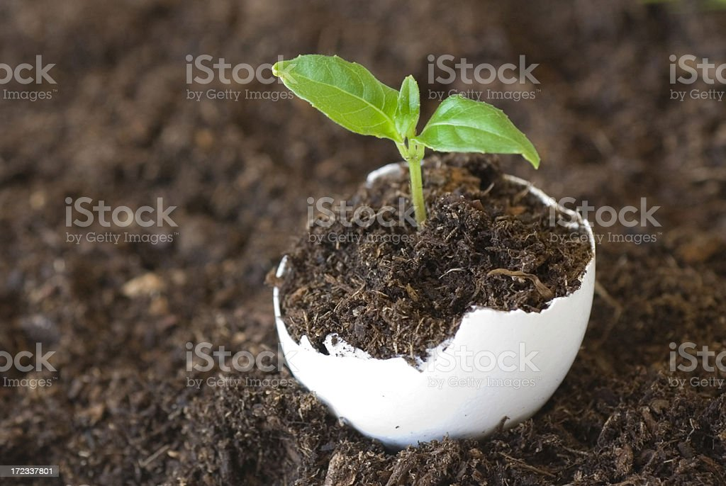 Concept, new life. royalty-free stock photo