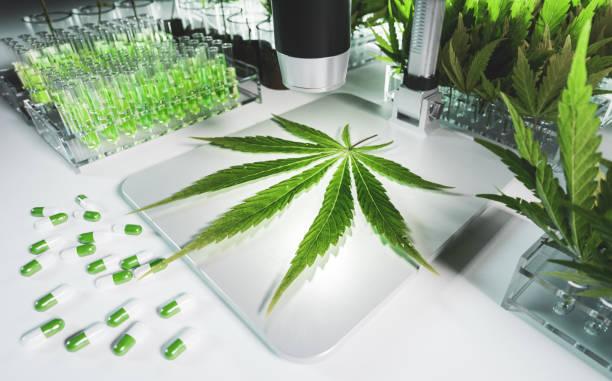 Konzept eines Cannabis in der medizinischen Forschung. Frisches Marihuanablatt auf dem Mikroskop umgeben von Reagenzgläsern mit Thc-Tinkturen, Blättern und Pillen in sauberer weißer Hightech-Laborumgebung. 3D-Rendering. – Foto
