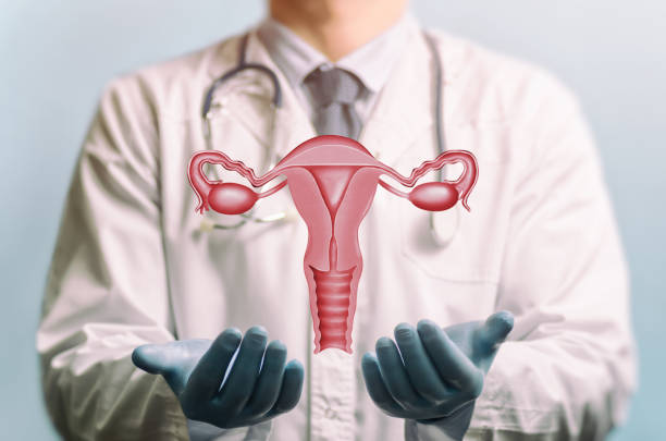 concept of a healthy female reproductive system. - uterus stock pictures, royalty-free photos & images