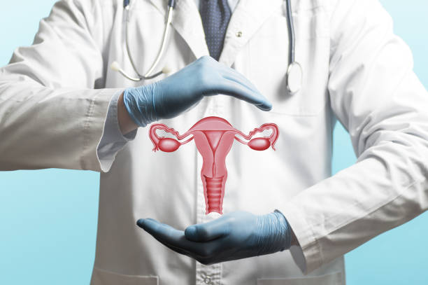 Concept of a healthy female reproductive system. Image of a doctor in a white coat and model of the reproductive system of women above his hands. Concept of a healthy female reproductive system. fallopian tube stock pictures, royalty-free photos & images