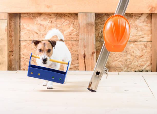 konzept der erbauer job: lustige arbeiter mit werkzeugkiste und bauarbeiterhelm - hundezubehör diy stock-fotos und bilder