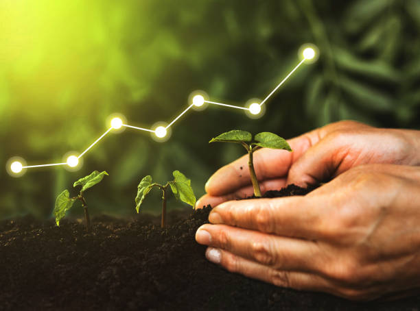 Concept of business growth, profit, development and success. Hand planting seedling growing step in garden with sunshine stock photo