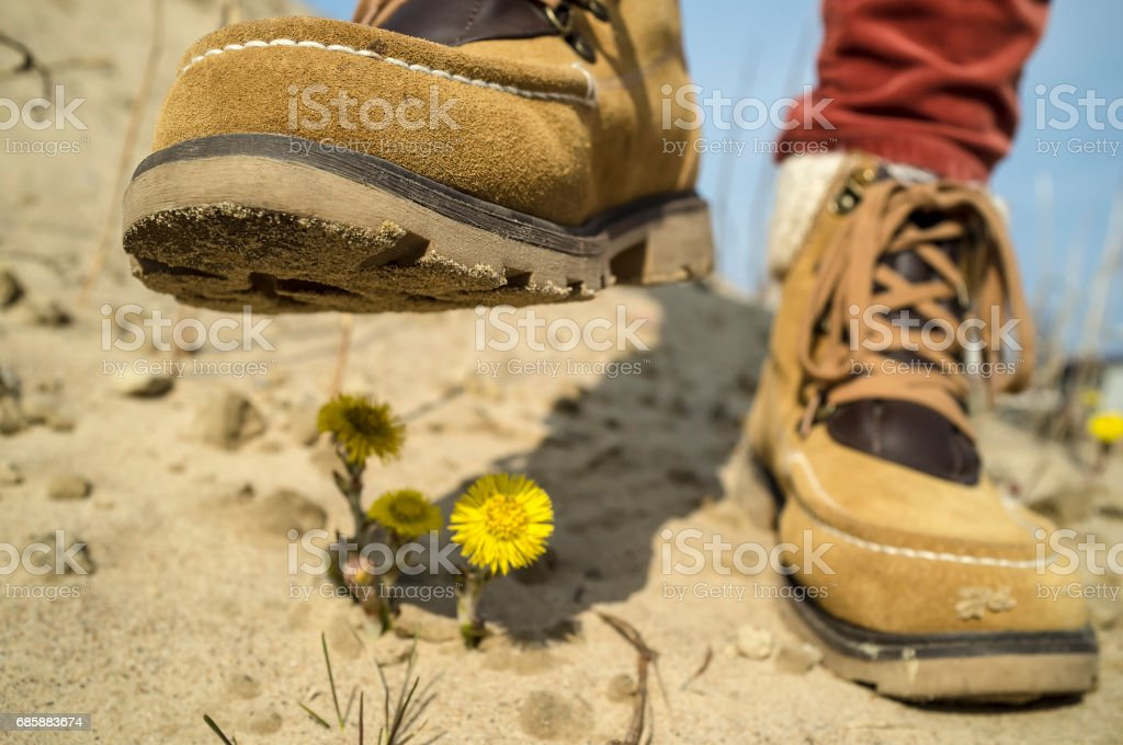 Concept of environmental protection: Person in shoes steps on the spring yellow flowers in the sand, destroying them. stock photo