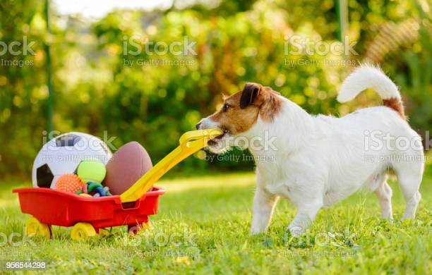 Concept of fun summer activities with dog and many sport balls picture id956544298?b=1&k=6&m=956544298&s=612x612&h=0o5tejknzcf12ykocml3h duowutnz7ap5rqrimo88s=