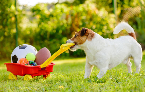 Concept of fun summer activities with dog and many sport balls picture id956544298?b=1&k=6&m=956544298&s=612x612&w=0&h=ogbpsuu3zwtsukz9ef2ugai2m eiestm3pa1nre2ivc=