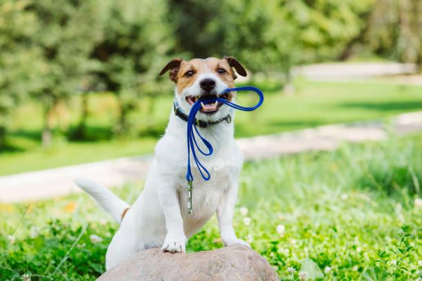 Concept van gelukkig ochtend wandeling met een hond in het park foto