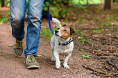 istock Concept of healthy lifestyle with dog and man hiking outdoor 1143749718
