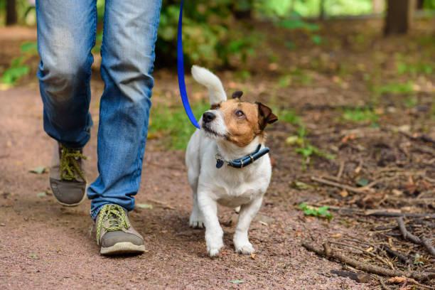 koncepcja zdrowego stylu życia z psem i człowiekiem wędrówki na świeżym powietrzu - wędrować zdjęcia i obrazy z banku zdjęć