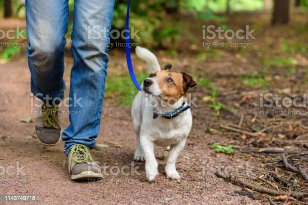 Photo of Concept of healthy lifestyle with dog and man hiking outdoor