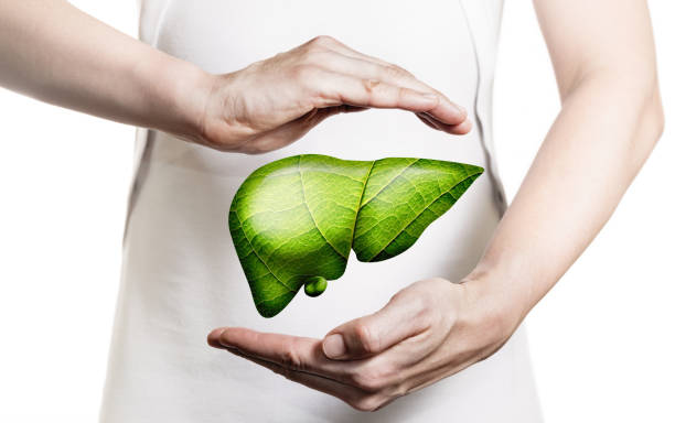 Concept of healthy liver and donation. stock photo