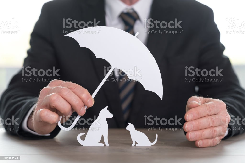 Concept of insured pets stock photo