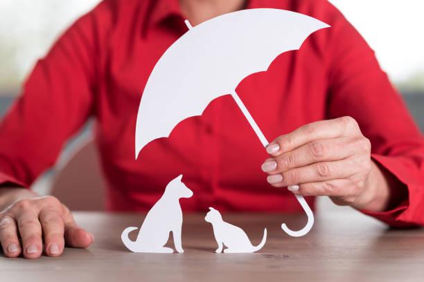 Concept of insured pets picture id694454412?b=1&k=6&m=694454412&s=612x612&w=0&h=r7eprwd5mj7m7l40tum1 ftdp qs2i a dwkium5wl0=