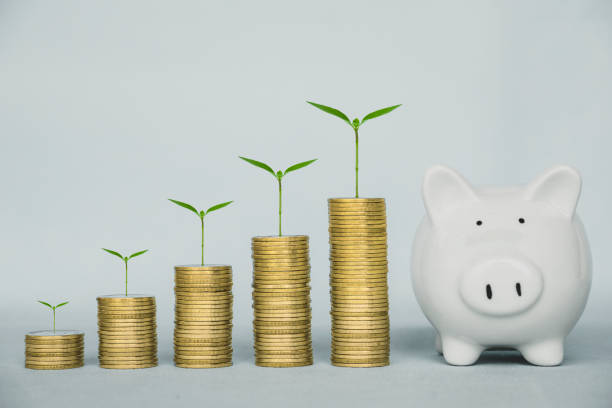 Concept of money saving and business finance, Money coin stack and plant growing up on coin with piggy bank saving, with copy space.